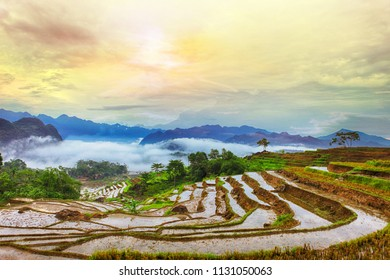 Terraced rice field in water season in Pu Luong, Thanh Hoa, Vietnam.