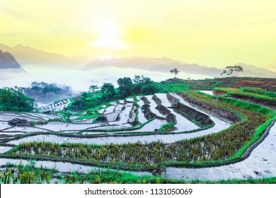 Terraced rice field in water season in Pu Luong, Thanh Hoa, Vietnam.