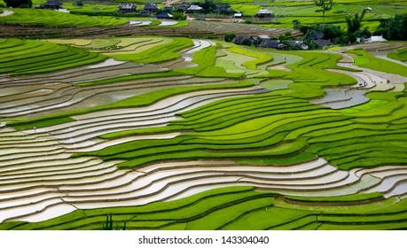 Terraced rice field in water season in Mu Cang Chai, Yen Bai province, Vietnam
