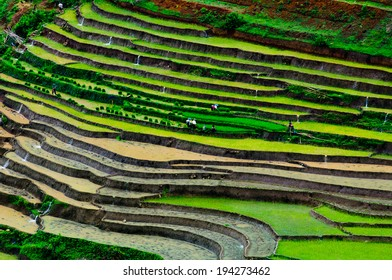 Terraced rice field in water season in Sapa, Vietnam