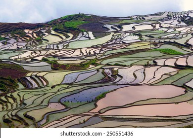 Terraced rice field in water season of Hani ethnic people in Yunnan province, China.