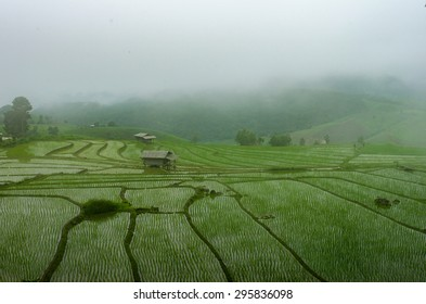 Terraced rice fields with fog in the morning at northern Thailand ,Pa pong peang, Chiang Mai