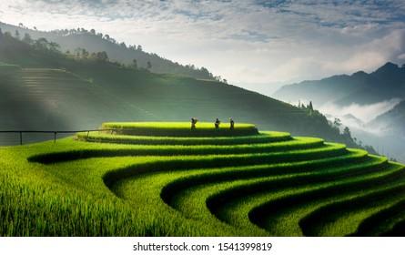 Terraced rice fields in Mu Cang Chai district, Yen Bai province, Vietnam harvest season