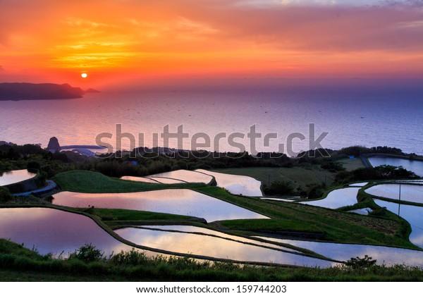 Terraced rice fields . sunset