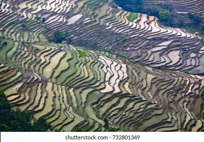 Terraced rice fields in Yuanyang county, Yunnan, China. Yuanyang county lies at an altitude ranging from 140 along the Red River up to nearly 3000 metres above sea level in the Ailao mountains.