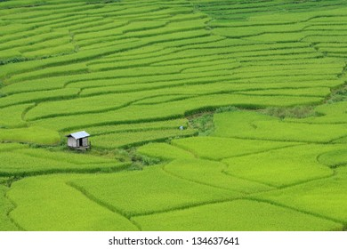 Terraced rice on Mountain, Nan Province, Northern of Thailand.
