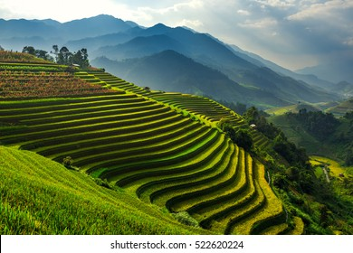 Terraced rice paddy field landscape of Mu Cang Chai, Yenbai, Northern Vietnam