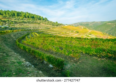 Terraced vineyards of the Douro Valley, Portugal that illustrates the viticulture and heritage