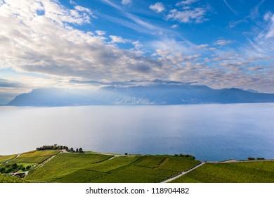 Terraced Vineyards at Lake Geneva in Lavaux, Switzerland