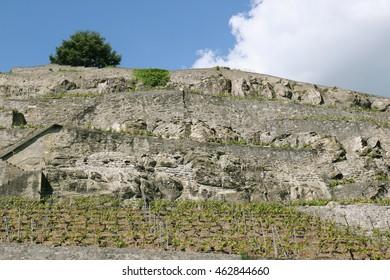 Terraced vineyards overlooking lake Geneva in Lavaux, a UNESCO World Heritage Site in canton Vaud, Switzerland.