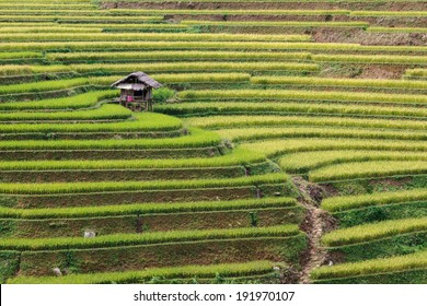 terraces field around guardhouse in northwest, Lao Cai, Vietnam