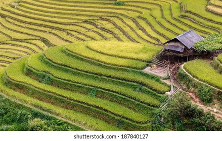 The terraces of hmong