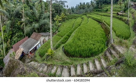 Terraces, Waterfalls, And A Spectacular Temple: Pura Gunung Kawi - Shutterstock ID 634183394