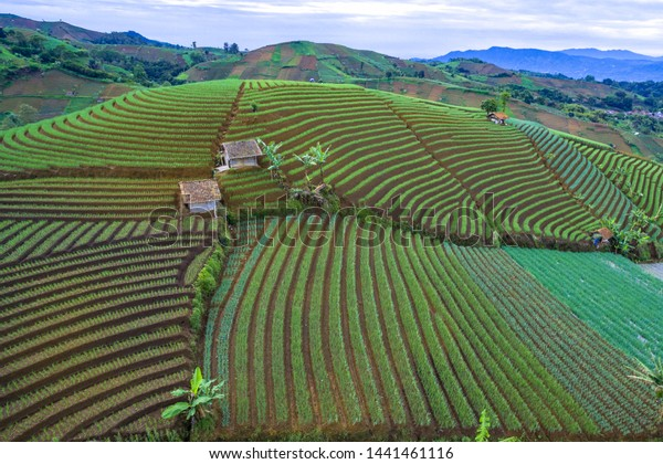 Terracing Garden Onion Argapura Majalengka West Stock Photo Edit