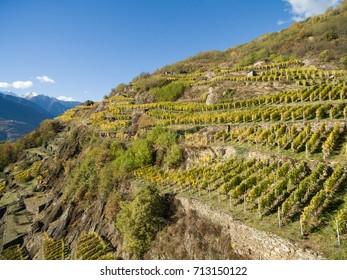 Terracing in Valtellina, vineyard