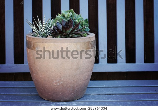 Groovy Terracotta Pot Copper Tape Full Succulents Stock Photo Edit Caraccident5 Cool Chair Designs And Ideas Caraccident5Info
