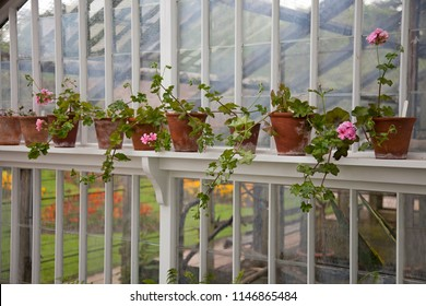 Terracotta Pots on a shelf in an old Victorian greenhouse