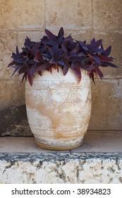 Terracotta vase with a violet succulent plant