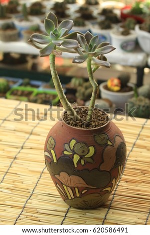 Terrarium Bonsai Succulent Cactus Design Decoration Stock Photo