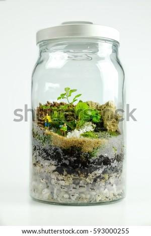 Terrarium Bottle Decorated Small Trees Miniature Stock Photo Edit