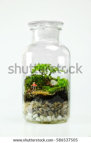 Terrarium Bottle Design Green Leafs Moss Stock Photo Edit Now