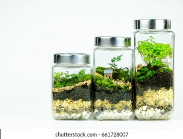 Terrarium design to be forest landscape and tiny home inside and isolated on white background
