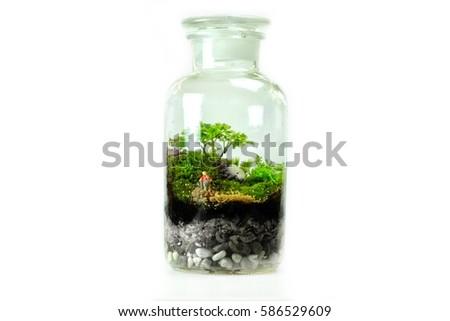 Terrarium Design Small Tree Moss Farmer Stock Photo Edit Now