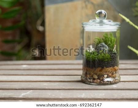Terrarium Glass Jar On Wooden Outdoor Stock Photo Edit Now