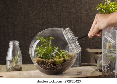 Terrarium, a hand with a tweezer making of bottle terrarium plant green house.