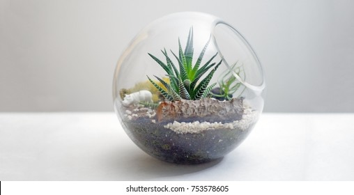 Terrarium isolated on table against gray background