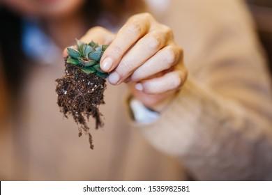 Terrarium Miniature Botanical Horticulture Grow. Terrarium  workshop.  Making Terrarium workshop