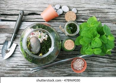 Terrarium with Miniature succulent plants.