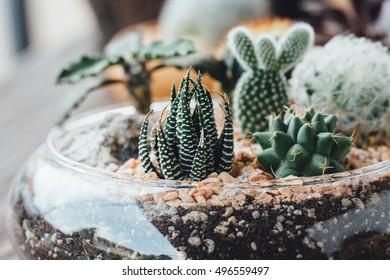 terrarium on wooden table