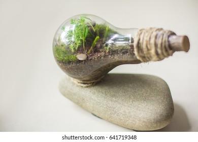 Terrarium plant in lamp. Life in a bottle