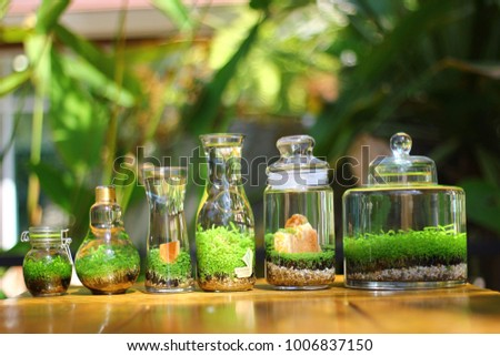 Terrarium Plants Bottles Stock Photo Edit Now 1006837150