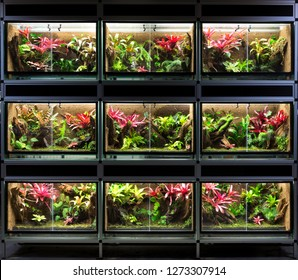 Tropical Rain Forest Terrarium Paludarium Exotic Stock Photo Edit