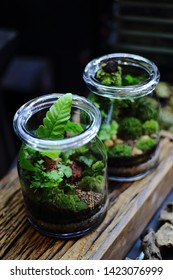 Terrarium small and little plants decorate in glass bottle