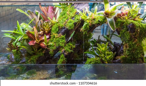 Terrarium style small garden with rock and driftwood in glass container containing soil and decoration Bromeliad plants.