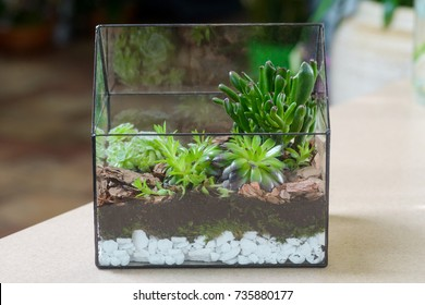 Terrarium with succulent plants in flower shop. Echeveria, Crassula ovata Gollum or Trumpet Jade are planted in multilayer soil.