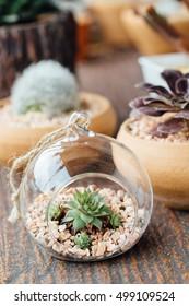 terrarium with succulent plants on wooden table