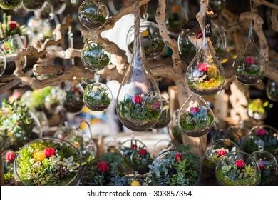 Terrariums inside glass jars.