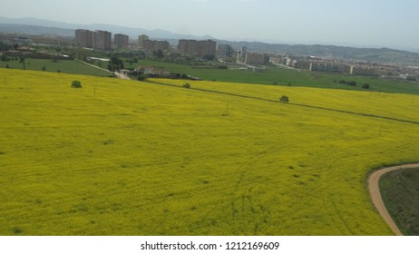 Terrassa, Spain - April, 20th, 2018: Aerial photo with drone showing a yellow rapeseed field in the country.