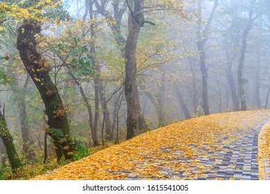 The terrenkur trail is strewn with fallen yellow leaves. Autumn deciduous forest in the fog. Mount Zheleznaya. Caucasus.