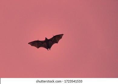 Terrible horrible bat silhouette in sky in flight. Night scary vampire in form of bat