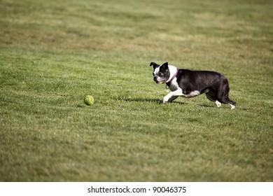 Terrier Ball Approach