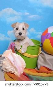 Terrier in a Beach Bucket