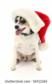 Terrier breed dog wearing Santa Christmas hat over white background.