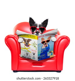 terrier dog reading magazine and tabloids on a red sofa , couch, or lounger , in living room , isolated on white background