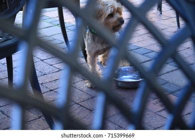 terrier dog seen through wrought iron texture - al fresco dining