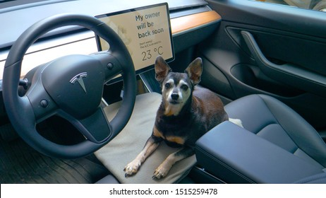 TESLA CAR, VIENNA, AUSTRIA, JULY 2019: CLOSE UP Senior dog sits inside a Tesla with dog mode turned on. Doggy relaxes without its owners in empty Tesla with the A/C on. Cute dog in a pet friendly car